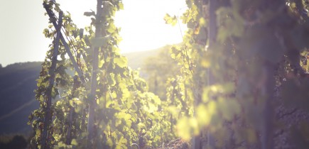 Rhone Valley guided tour